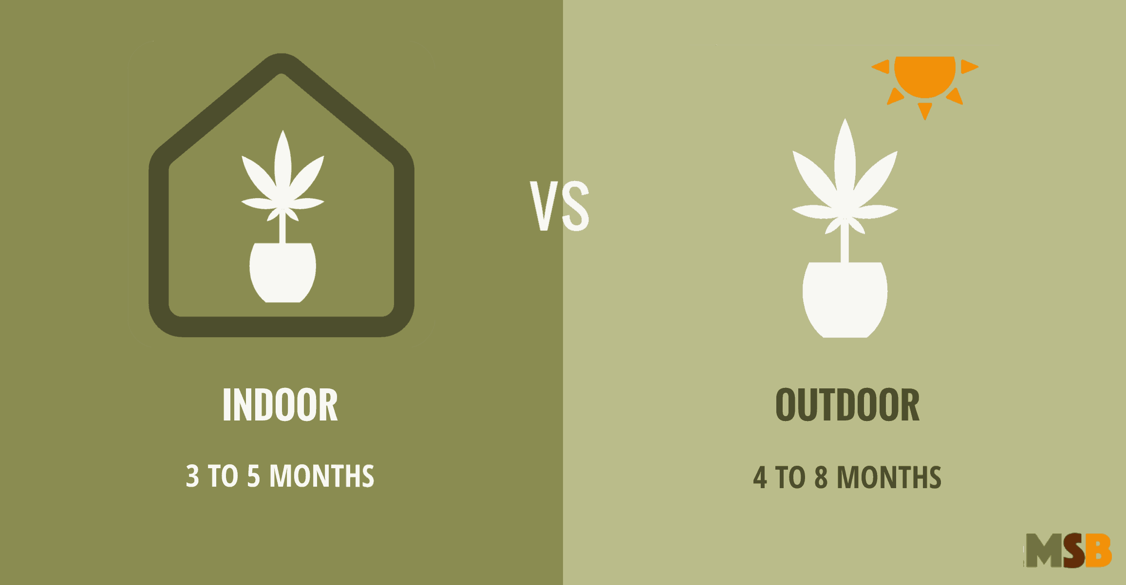 Stages of Marijuana Growth: from Seed to Harvest